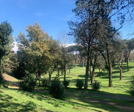 park_bomen