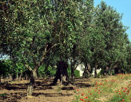 streeproducten_landbouw (9)