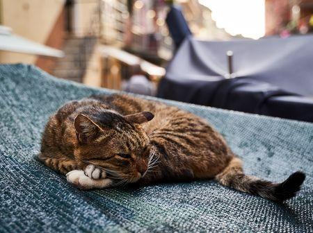 dieren_rome_katten_honden (1)