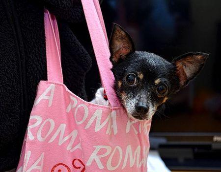 dieren_rome_katten_honden (2)