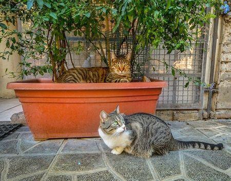 dieren_rome_katten_honden (5)